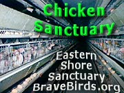 Chicken Sanctuary - Eastern Shore Sanctuary & Education Center